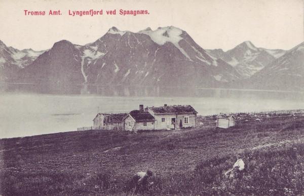 Tromsø Amt. Lyngenfjord ved Spaagnæs.