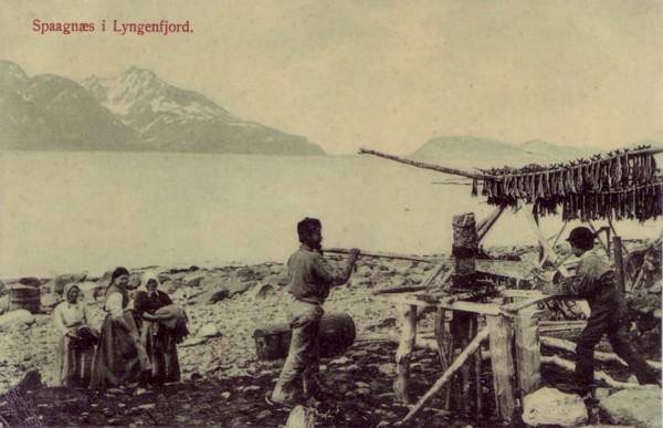 Spaagnæs i Lyngenfjord.